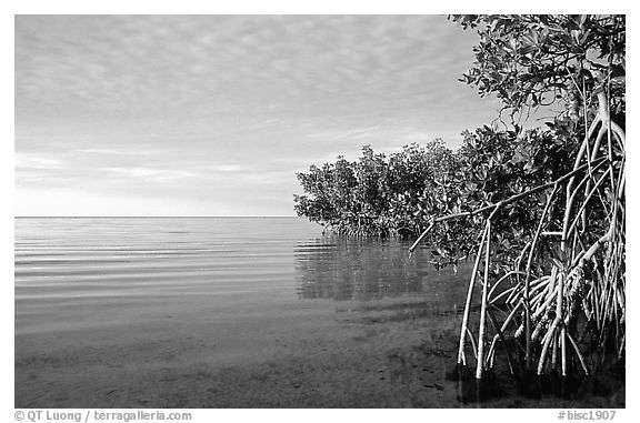 Mangrove shore of Elliott Key, sunset. Biscayne National Park, Florida, USA.