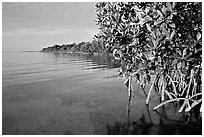 Coastal environment with mangroves,  Elliott Key, sunset. Biscayne National Park, Florida, USA. (black and white)