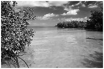 Mangrove forest on fringe of Elliott Key, mid-day. Biscayne National Park ( black and white)