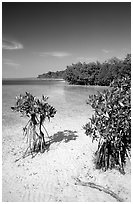 Mangrove shoreline on Elliott Key near the harbor, afternoon. Biscayne National Park, Florida, USA. (black and white)