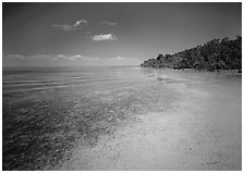 Shoreline and seagrass on Elliott Key near the harbor. Biscayne National Park, Florida, USA. (black and white)