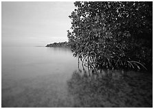 Coastal wetland community of mangroves at dusk, Elliott Key. Biscayne National Park, Florida, USA. (black and white)