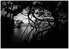 Silhouetted mangroves at dusk. Biscayne National Park, Florida, USA. (black and white)