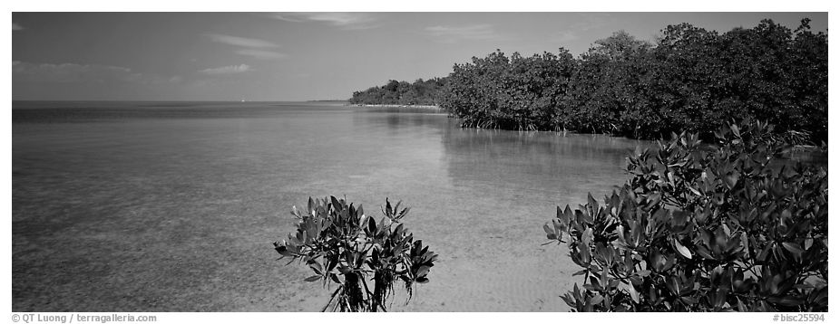 Eliott Key shoreline with mangroves. Biscayne National Park (black and white)