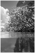 Over and underwater view of mangroves. Biscayne National Park ( black and white)