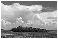 Mangrove islet in Caesar Creek and Atlantic Ocean. Biscayne National Park, Florida, USA. (black and white)