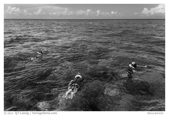 Snorklers and reef. Biscayne National Park (black and white)