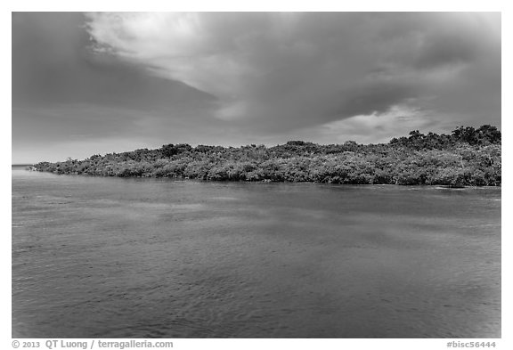 Adams Key, afternoon. Biscayne National Park (black and white)