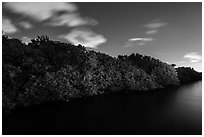 Row of mangroves trees at night, Convoy Point. Biscayne National Park, Florida, USA. (black and white)