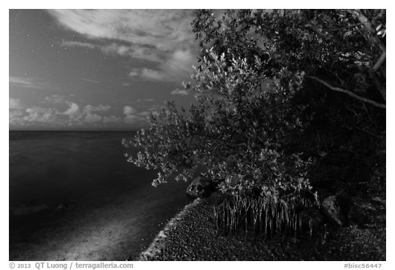 Mangroves and Biscayne Bay at night, Convoy Point. Biscayne National Park (black and white)
