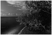 Mangroves and Biscayne Bay at night, Convoy Point. Biscayne National Park, Florida, USA. (black and white)