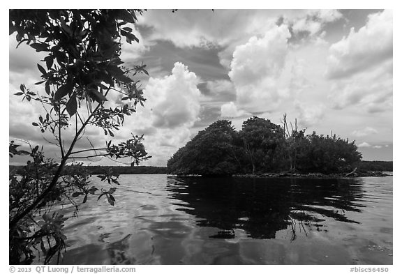 Mangrove islet, Biscayne Bay. Biscayne National Park (black and white)