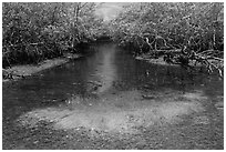 Stream lined up with mangroves. Biscayne National Park, Florida, USA. (black and white)