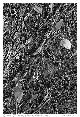 Beached seagrass, mangrove leaves, and gravel. Biscayne National Park (black and white)