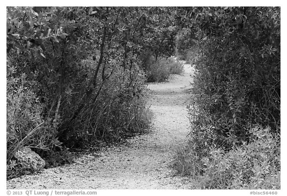 Trail, Convoy Point. Biscayne National Park (black and white)
