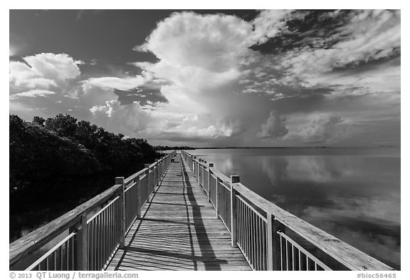 Boardwalk and mangroves, Convoy Point. Biscayne National Park (black and white)