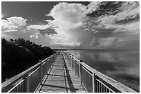 Boardwalk and mangroves, Convoy Point. Biscayne National Park, Florida, USA. (black and white)