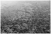 Aerial view of seagrass in Biscayne Bay. Biscayne National Park ( black and white)