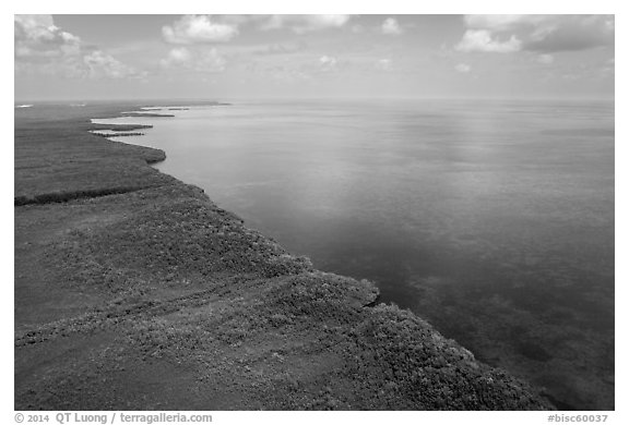 Aerial view of mainland mangrove coast. Biscayne National Park (black and white)