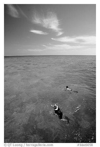 Snorkelers over a coral reef. Biscayne National Park (black and white)