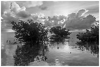 Mangroves and Atlantic Ocean, Boca Chita Key. Biscayne National Park ( black and white)