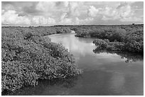 Narrow creek. Biscayne National Park ( black and white)