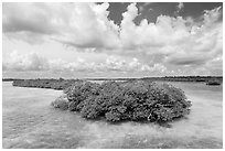 Mangrove islet, Linderman Key. Biscayne National Park ( black and white)