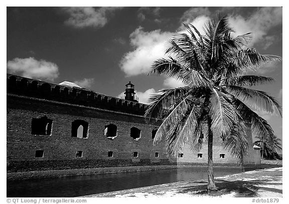 Palm tree and Fort Jefferson. Dry Tortugas National Park (black and white)