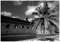 Palm tree and Fort Jefferson. Dry Tortugas National Park, Florida, USA. (black and white)