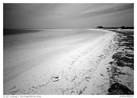 Tropical beach on Bush Key with conch shell and beached seaweed. Dry Tortugas National Park (black and white)