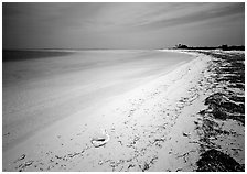 Tropical beach on Bush Key with conch shell and beached seaweed. Dry Tortugas National Park, Florida, USA. (black and white)