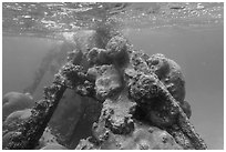 Coral-covered part of Windjammer wreck breaking surface. Dry Tortugas National Park, Florida, USA. (black and white)