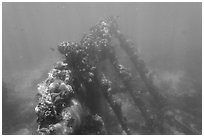 Sunken wreck of Avanti. Dry Tortugas National Park, Florida, USA. (black and white)
