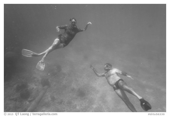 Couple free diving. Dry Tortugas National Park (black and white)
