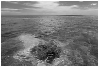 Coral head and ocean, Loggerhead Key. Dry Tortugas National Park ( black and white)