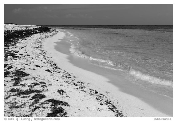 Beach with beached seagrass, Loggerhead Key. Dry Tortugas National Park (black and white)