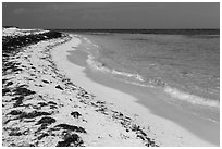 Beach with beached seagrass, Loggerhead Key. Dry Tortugas National Park ( black and white)