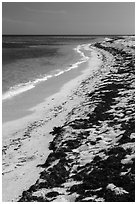 Beached seagrass and shoreline, Loggerhead Key. Dry Tortugas National Park, Florida, USA. (black and white)
