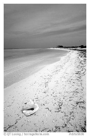 Conch shell and sandy beach on Bush Key. Dry Tortugas National Park (black and white)