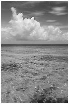 Reef and tropical clouds. Dry Tortugas National Park, Florida, USA. (black and white)