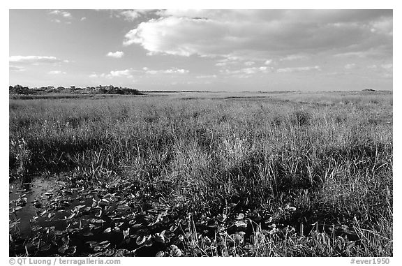 Marsh near Ahinga trail, late afternoon. Everglades National Park (black and white)