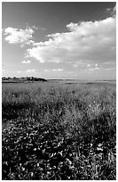 Freshwater marsh with aquatic plants and sawgrass near Ahinga trail, late afternoon. Everglades National Park, Florida, USA. (black and white)