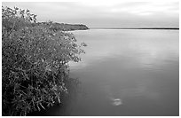 Mangrove shore of West Lake. Everglades National Park, Florida, USA. (black and white)
