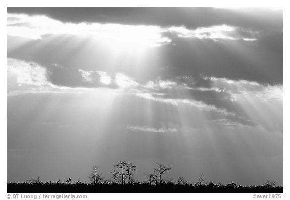 Cypress and sun rays, sunrise, near Pa-hay-okee. Everglades National Park (black and white)