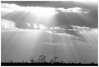 Cypress and sun rays, sunrise, near Pa-hay-okee. Everglades National Park, Florida, USA. (black and white)