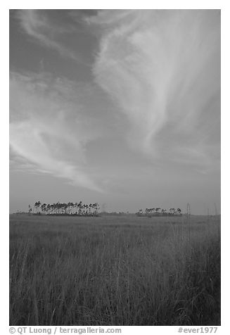 Sawgrass prairie, pines, and clouds at sunrise, near Mahogany Hammock. Everglades National Park (black and white)
