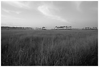 Sawgrass prairie environment with distant pinelands near Mahogany Hammock. Everglades National Park ( black and white)