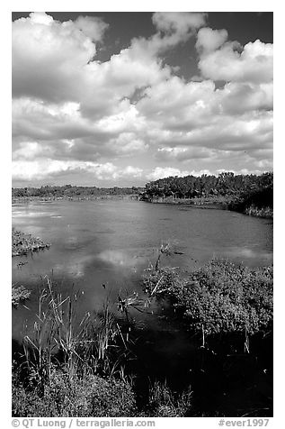 Eco pond. Everglades National Park (black and white)