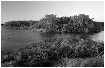Eco pond with birds in distant trees, evening. Everglades National Park, Florida, USA. (black and white)