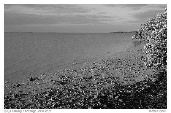 Shore of Florida bay at low tide, morning. Everglades National Park (black and white)